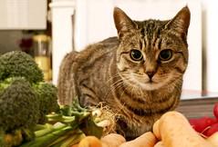 """Mom says it's healthy."" (evakatharina12) Tags: cat tabby kitty kitchen vegetables healthy indoors broccoli carrots"