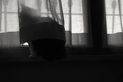 Al calduccio (carlo612001) Tags: gatto gatti mici finestra inverno calduccio winter frozen itscoldoutside cat cats monocrome kitten pets windows wndows kitty kittens