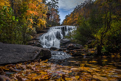 Fall Leaves at Bald River Falls (Ron Harbin Photography) Tags: cherokee national forest water waterfall river stream torrent flood rock boulder covered moss landscape frame full fx outdoor f28 24mm d750 nikon copyright black blue green tree lightroom diffused light shade natural depth field pictures spring summer autumn fall winter 2017 2018 flower grass escape fairytale wonderland photographer golden hour travel sun