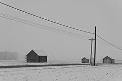 Old Farm (ramseybuckeye) Tags: winter snow fog foggy old farm barn shed telephone poles road country rural fields gray allen county ohio black white pentax art