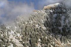 Cascade Mountain (arbyreed) Tags: arbyreed mountain snow winter cold trees snowflockedtrees pine snowcoveredpinetrees cascademountain cloud mist utahcountyutah wasatchmountainrange