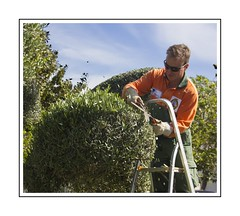 Trimming (Audrey A Jackson) Tags: canon60d garden man hedge trimming cutting stepladder trees sky clouds sunglasses