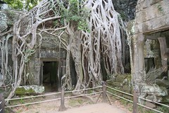 Angkor_Ta Prohm_2014_38