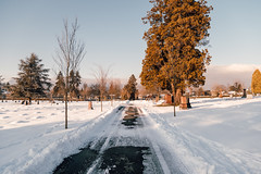 Vancouver-Winter-Walks-21 (_futurelandscapes_) Tags: vancouver winter snow cold february mountainview cemetery trees arboretum sunset evening graves sunny blue white vintage