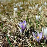 2019-03-29 03-31 Südtirol-Trentino 030 Caldonazzo-Lochere, Pizzo di Levico thumbnail