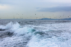 Pacific Ocean (Bluesilver85) Tags: pacific ocean vancouver island sea waves nature blue victoria canada unitedstates usa giuliavitale
