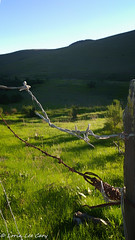 Ranch Fence Detail 5 (lorinleecary) Tags: grass otherkeywords post barbedwire mountain green ranchfence fence