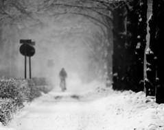 6Q3A9456 (www.ilkkajukarainen.fi) Tags: blackandwhite mustavalkoinen monochrome helsinki city boulevatd visit travek travelling happy life suomi finland finlande eu europa scandinavia bike pyöräily talvi winter snow lumi biking polkupyörä pyörä absoluteblackandwhite