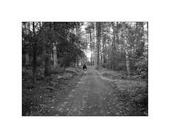 Walking in the woods (Franco & Lia) Tags: street fotografiadistrada photographiederue strasenfotografie sardegna sardinia tempiopausania bosco foresta forest woods biancoenero schwarzundweiss noiretblanc blackandwhite passeggiata walk