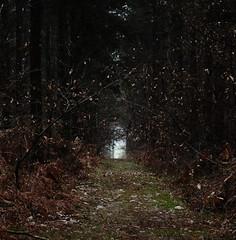 Salut c'est l'hiver (dreamearth 85) Tags: vendée forêt du détroit saintmartindesnoyers 85140 paysdelaloire hiver nature paysage allée nikon d7000