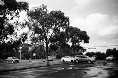 Parking lot trees (Matthew Paul Argall) Tags: kodakstar500af 35mmfilm blackandwhite blackandwhitefilm ilforddelta100 100isofilm parkinglot parkedcars tree trees