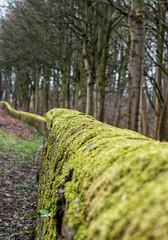 Mossy Wall (Adrian.W) Tags: moss greenmoss wall stones countrylane harewood leeds yorkshire nikon nikond5500 d5500 70300mm