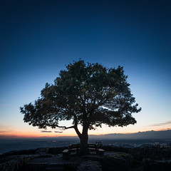 loneley tree view, bonn (Tafelzwerk) Tags: löwenburg bonn tree baum landscape landschaft rhein rheinland köln siebengebirge sunset sunrise sonnenuntergang sonnenaufgang blätter autumn herbst himmel sky sun sonne nikon