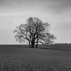 Tree (Velby) Tags: tree landscapes landschaft blackandwhite blackwhite trees bw