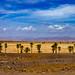 Time is tight, Sahara, 20150924