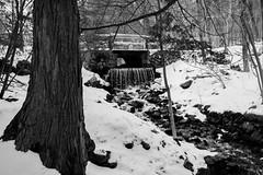 Flowing Through Winter (Northern Wolf Photography) Tags: 19mm bridge brook em5 fells forest middlesex monochrome olympus snow spotpondbrook spotpondfalls statereservation tree waterfall woods stoneham massachusetts unitedstatesofamerica us