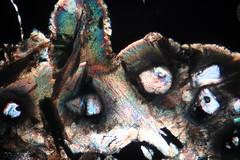 Fervex saison 2 (b.dussard25) Tags: microphotographie abstract macro pharmacy abstrait art canon