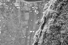 Waldnaabtal, Uppert Palatinate (rgiw) Tags: deutschland bayern blackwhite bw schwarzweiss sw colour farbe monochrome oberpfalz upperpalatinate bäume trees fluss river sonya7r2 sonya7rii flower grass gras blume himmel waldnaab wasser water wolken clouds blackandwhite fels rock waldnaabtal voigtländercolorheliar2575mm