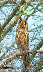 110634632 (TARIQ HAMEED SULEMANI) Tags: sulemani tariq tourism trekking tariqhameedsulemani winter wildlife wild birds nature nikon