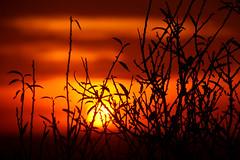 SUNSET PORTUGAL_0399 (ichauvel) Tags: coucherdesoleil sunset soleil sun silhouettes branches ciel sky couleurs colors orange beautédelanature beautyofnature automne autumn exterieur outside voyage travel algarve alte portugal europe