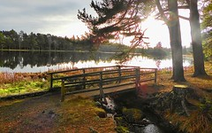 Nelly's Moss, North Lake, Crag Side, Northumberland, UK (BrianDerbyshire) Tags: water reservoir cragside northumberland uk bridge path light reflections panasonic lumix