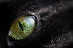 Feline (nadeen_aljamal88) Tags: green cat cats kitten eye eyes beautiful black color colours halloween horror scary hororr maro macroshot