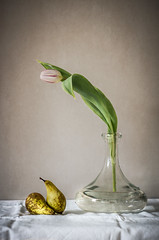 Still life with tulip and pears (Rense Haveman) Tags: fsulens fsulenslenzen gimp pentaxart helios 44m helios44m pentaxk5 pentaxforumscom wall flower vase pears fruit cloth texture stilllife
