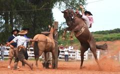 Érick e Tormenta da Cem Rumo (Eduardo Amorim) Tags: gaúcho gaúchos gaucho gauchos cavalos caballos horses chevaux cavalli pferde caballo horse cheval cavallo pferd pampa campanha fronteira quaraí riograndedosul brésil brasil sudamérica südamerika suramérica américadosul southamerica amériquedusud americameridionale américadelsur americadelsud cavalo 馬 حصان 马 лошадь ঘোড়া 말 סוס ม้า häst hest hevonen άλογο brazil eduardoamorim gineteada jineteada