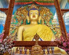 Dharamshala Buddha at Gyuto Tantric Monastery 45 (OvermindStarchild) Tags: india buddha buddhastatue buddhist statue dharamshala himachalpradesh mcleodganj buddhistmonastery gyutomonastery buddhisttemple
