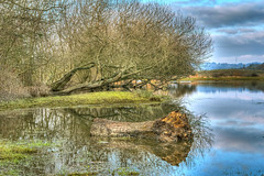The Old Tree Stump (niloc's pic's) Tags: trees tree flood water reflections combevalley bexhillonsea eastsussex panasonic lumix dcg9