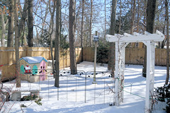 A Back Yard Landscape (hbickel) Tags: backyard snow trees metalfence woodenfence shed canont6i canon photoaday pad