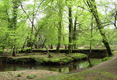 New Forest NP, Hampshire, UK (east med wanderer) Tags: england hampshire uk newforestnationalpark nationalpark stream highlandwater spring trees woodland forest beech