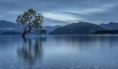 In the morning (David Feuerhelm) Tags: nikkor serene calm longexposure dawn light lakewanaka wanaka central otago newzealand southisland nikon d750 2470mmf28