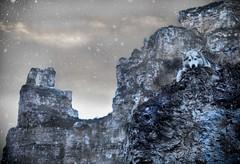 Lulu_2019 (jeffreyshanor) Tags: snow sky clouds dark dramatic dog doggo hike walk mountain mountains canyon adventure explore pets animals husky nature snowy wyoming river sheridan landscape wilderness trees desert