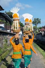(kuuan) Tags: bali ladies women offerings head village path row odalan festival sonyrx100iii
