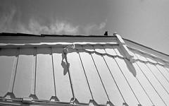 Sentinel (Timothy Lewis Jr.) Tags: trix crows berkeley olympusxa analoguefilm kodaktrix