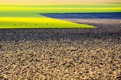 Mårten_Svensson_3U4A2199 (Bad-Duck) Tags: jordbruk mat vår djur grönt höstvete livsmedel livsmedelsproduktion plöjnad rådjur årstid