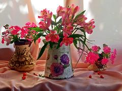 В розовом цвете (lvv1937) Tags: цветы кувшин ваза |натюрморт|пост1комментарий38 мыизяфа