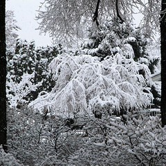 Snow Squared (arbyreed) Tags: arbyreed snow winter cold snowfall fractalsnow trees bushes snowcoveredtrees