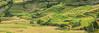 _MG_5301-04.0911.1.Dế Xu Phình.Mù Cang Chải.Yên Bái (hoanglongphoto) Tags: asia asian vietnam northvietnam northwestvietnam landscape scenery vietnamlandscape vietnamscenery vietnamscene panorama terraces terracedfields seasonharvest hill hillside one 1 home house canon canoneos5dmarkii canonef70200mmf28lisiiusm tâybắc yênbái mùcangchải dếxuphình phongcảnh ruộngbậcthang lúachín mùagặt ngọnđồi sườnđồi mùcangchảimùalúachín mùcangchảimùagặt cruve đườngcong abstract trừutượng