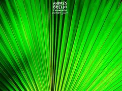 Explosión (Andres Breijo http://andresbreijo.com) Tags: natural nature naturaleza luz atardecer anochecer verde green sunset laconcepción malaga andalucia españa spain planta vegetal