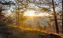 Altenberg (Hyperfokale Distanz) Tags: landschaft hügel hill altenberg badneustadt landkreisrhöngrabfeld canoneos77d landscape sunrise sonnenaufgang hdr bayern unterfranken wald forest baum tree valley tal sun sonne sonnenstrahlen sunrays sigma1750mmf28