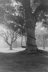 Ash tree and swing (shanahands2) Tags: nikonfa manual 35mm bw film 1999 scanned morning mist sun light