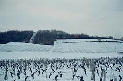 Vignes (leniners) Tags: 2018 france rhone silbersalz35 leica m6 leicam6 bully neige snow