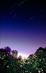 Elderberries (soul.tan) Tags: canon eos 3 ef 17 40 f4 l star trails astro landscape fuji velvia 100 rvp100 konica minolta dimage scan elite 5400 elderberry night spring may sambucus nigra