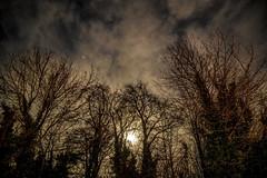 on fire tonight (Paul Wrights Reserved) Tags: moo moonlight moon moonandthestars mon nighttmoonscapemoon through treesnightnight photographynight time nightscape sky skyscape skyscapes star stars astrophotography astro