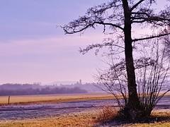 FROSTY MORNING 20190217_094521 (2) (hlh 1960) Tags: landschaft landscape tree nature natur himmel sky morning frosty frost outdoor wiese feld home heimat weite kirchturm church