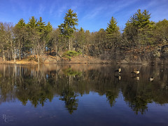 The Pond in Late Winter (RobertCross1 (off and on)) Tags: boston ma malden massachusetts melrose newengland pinebankspark birds bluesky ducks forest geese iphone iphone6 iphoneography lake landscape pond reflection trees water winter unitedstates us