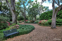 Beautiful Day at Bok Tower Gardens (pandt) Tags: boktowergardens garden flowers azaleas bloom blossom path trees nature plants bench outdoor landscape botanical tree leaves spring canon eos slr 6d