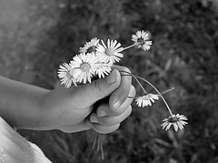for You (majka44) Tags: daisies flower light hand child people blackandwhite black|white bw art